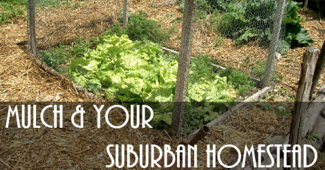 Mulch And Your Suburban Homestead