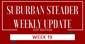 2017 Suburban Steader Update – Week 19