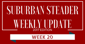 2017 Suburban Steader Update – Week 20