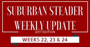 2017 Suburban Steader Update – Weeks 22, 23 & 24